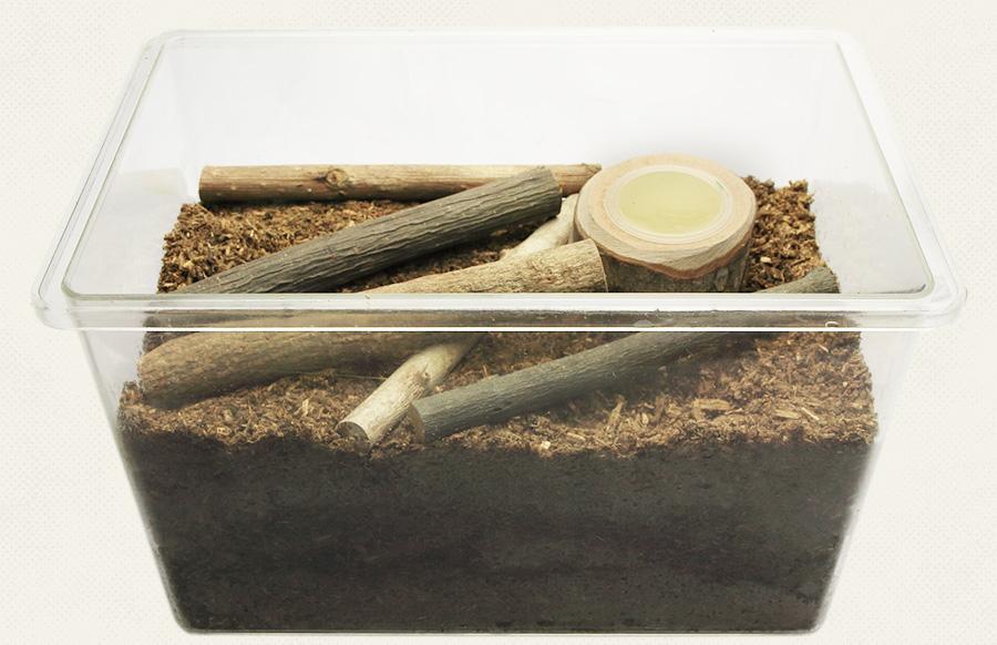 オオクワガタの冬眠(越冬)方法 エサと転倒防止材を置く