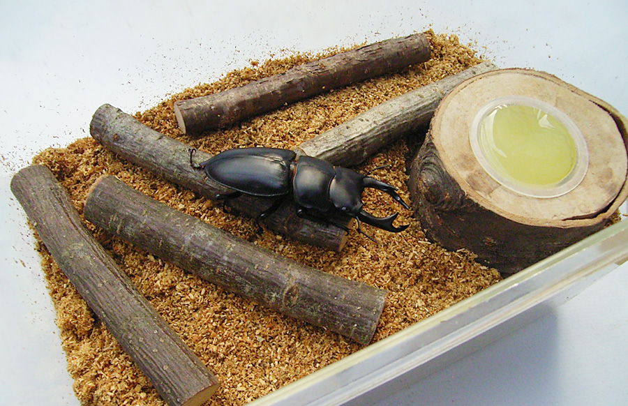 オオクワガタの成虫の飼育方法 セット完成
