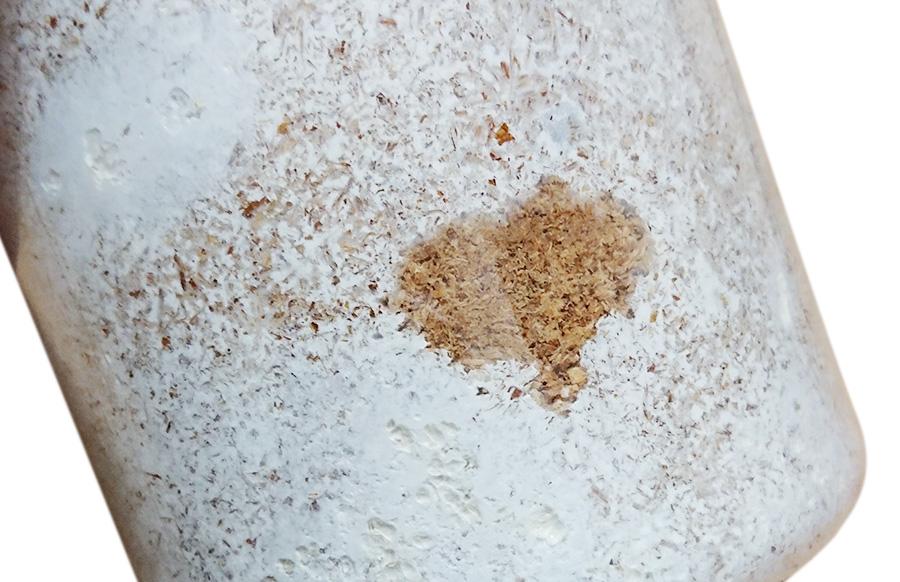 菌糸ビン幼虫が食べた痕