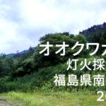 オオクワガタ 灯火採集記 福島県南会津 2018