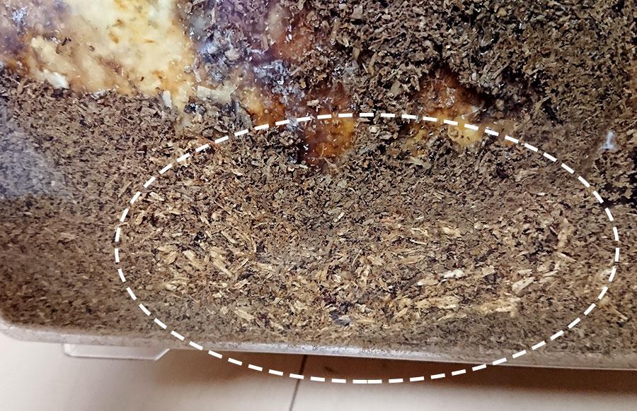 産卵木が削られているのが確認できた