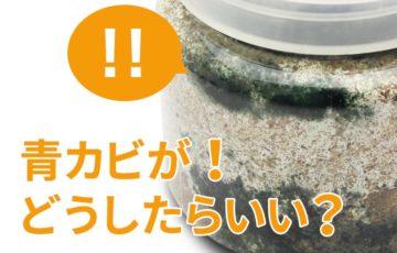 オオクワガタの菌糸ビンに青カビが!原因と対処法はどうすればいい?
