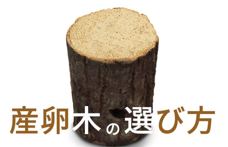 これで完璧!オオクワガタの産卵木の選び方。おすすめってどんな材なの?