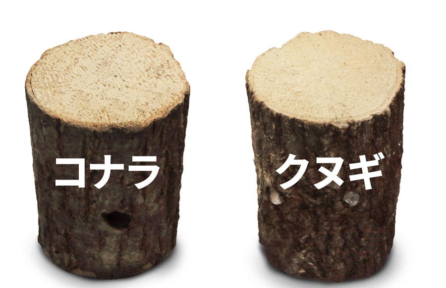 産卵木はクヌギかコナラがメイン