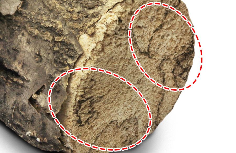 産卵木の黒い線やシミの部分