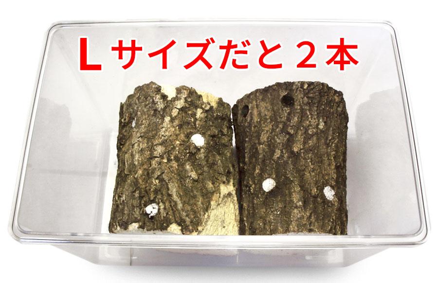 中サイズのケースにLサイズの産卵木は2本