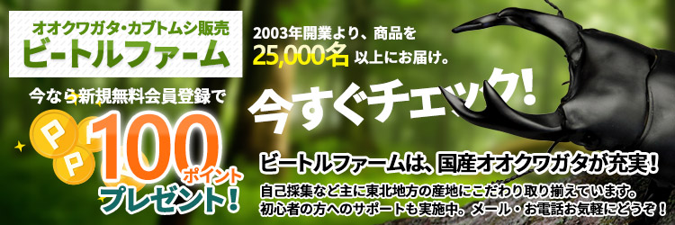 オオクワガタ販売・通販のビートルファーム 各種クワガタムシ・カブトムシや飼育用品もご販売!!