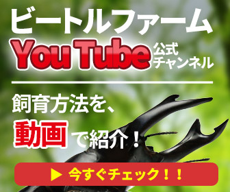ビートルファームyoutube公式チャンネル
